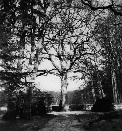 El gran roble del parque. La tumba de Sigwart está detrás del muro