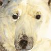 el-oso-blanco-narracion-inspirada-en-una-keyenda-inuit.png